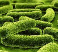 Новый метод идентифицирует лекарства для борьбы с устойчивостью бактерий