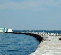 В Одессе не рекомендуют купаться в море, чтобы не подхватить опасное заболевание
