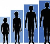 Рост человека определяется не только генетикой