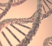 Зачатие и первые половые отношения могут регулироваться генами