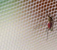Создали одежду на каждый день, которую не может прокусить комар