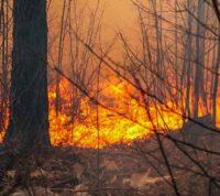 Дым от лесных пожаров влияет на заболеваемость COVID-19