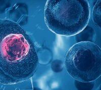 Ученые открыли клетки, регулирующие давление в организме