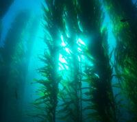 Ученые получили возможность больше узнать об общих противовирусных свойствах водорослей