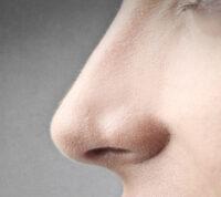 Носовой хрящ используют для лечения коленного сустава