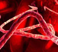 Вирус Эбола может спать в организме и спустя годы вызывать новые вспышки заражения