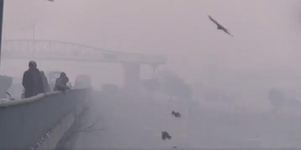 Борьба за чистый воздух: жители Джакарты выиграли суд у правительства Индонезии