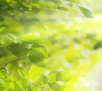 Солнечный свет – это профилактика преждевременных родов