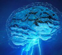 Від запалення до хвороби й депресії: коли імунна система підпорядковує собі мозок